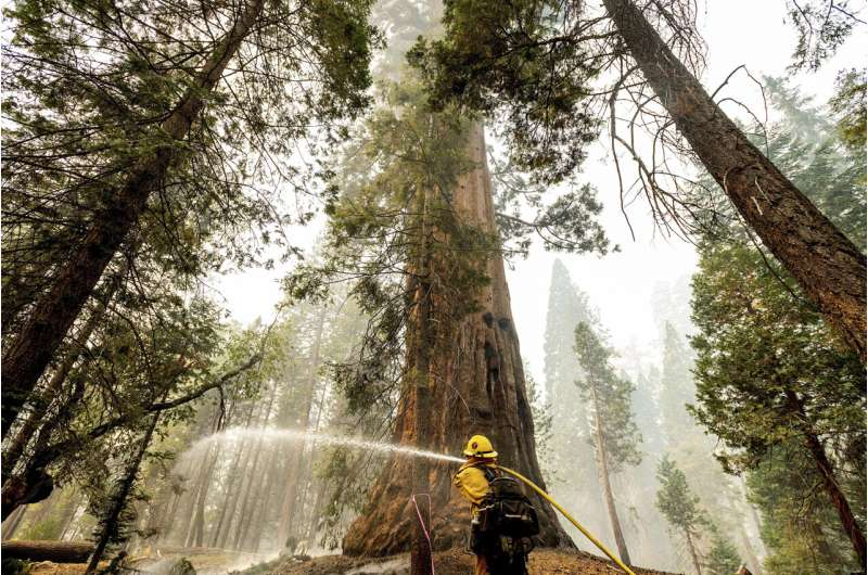 Sequoia National Park's Giant Forest unscathed by wildfire