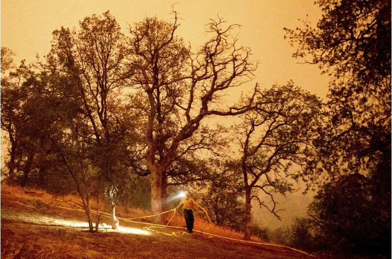 Big trees in Sequoia National Park are threatened by fires
