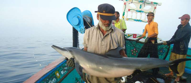 Setting nets below the surface mean fishermen catch almost 80 percent fewer dolphins, whales