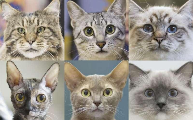 Siete rasgos de personalidad y comportamiento identificados en gatos