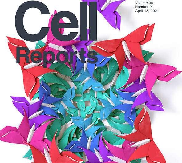 Shape-shifting Ebola virus protein exploits human RNA to change shape