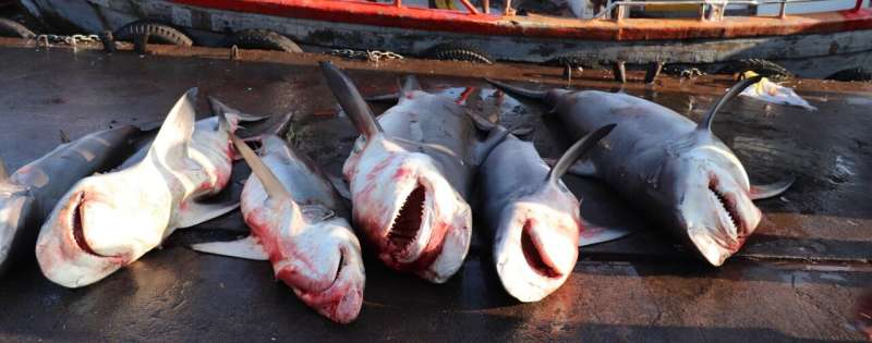 Sharks in protected area attract illegal fishers
