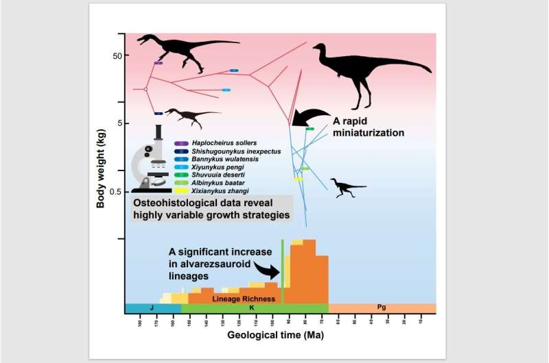 Sharp size reduction in dinosaurs that changed diet to termites
