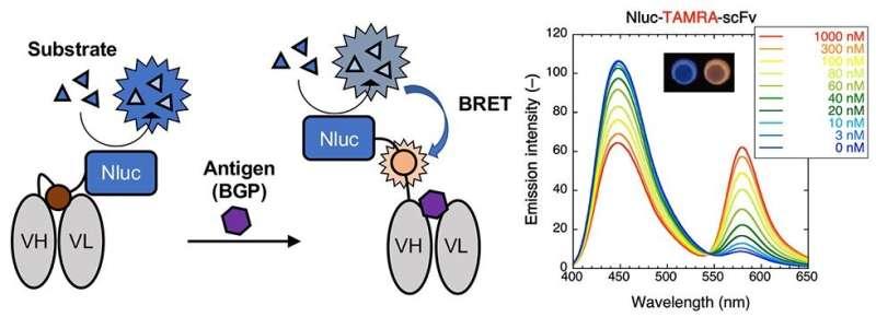 Shedding new light: A new type of immunosensor for immunoassay tests