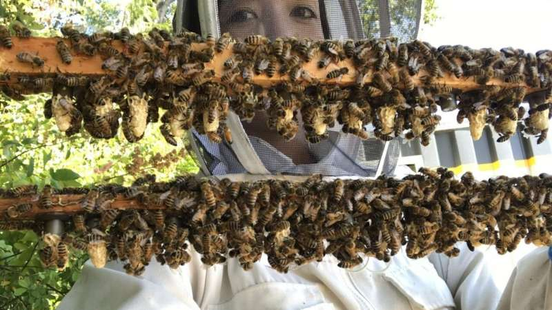 Shedding light on the secret reproductive lives of honey bees