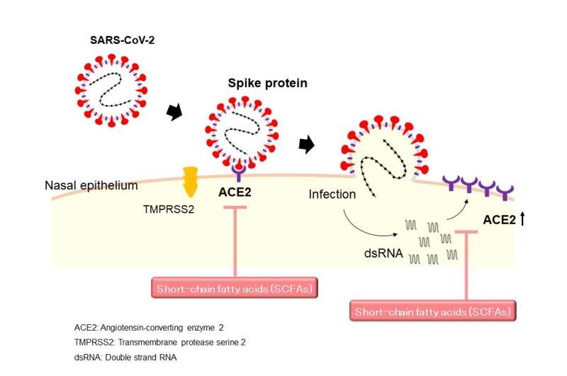 Short chain fatty acids: An 'ace in the hole' against SARS-CoV-2 infection