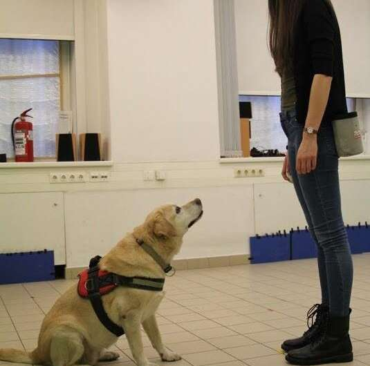 Shorter headed dogs, visually cooperative breeds, younger and playful dogs form eye contact faster