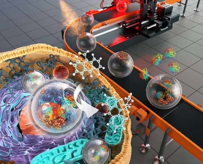 Silica nanostructure with chemo-enzymatic compartmentalization