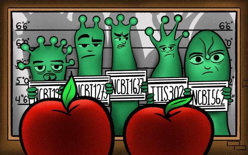 """Tecnología """"plata"""": invención para ayudar a detectar sustancias químicas en frutas y verduras"""