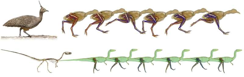 Simulations show bipedal dinosaurs swung their tails as they ran to help with balance
