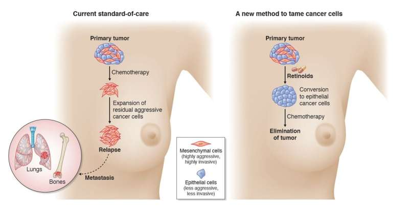 Singapore team discovers novel strategy to tame aggressive breast cancer and starts clinical trial