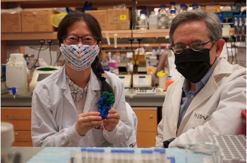 Singapore and US scientists uncover how the Wntless protein carries Wnts in its signalling pathways