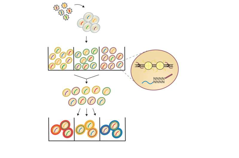 Single-cell CRISPR technology deciphers role of chromatin accessibility in cancer