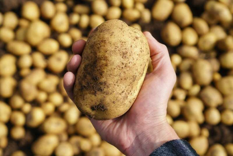 Six reasons why potatoes are good for you