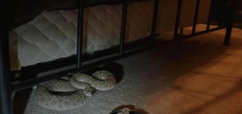 Snakes alive? We're totally fine with them -- just not at our house