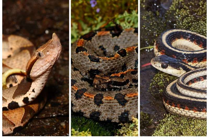 Snake sex chromosomes say less about sex and more about survival