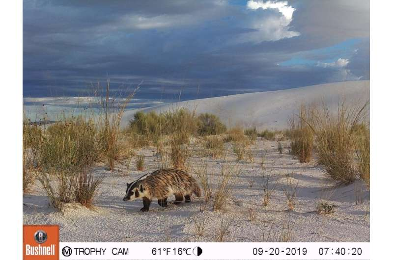 SNAPSHOT USA: First-ever nationwide mammal survey published
