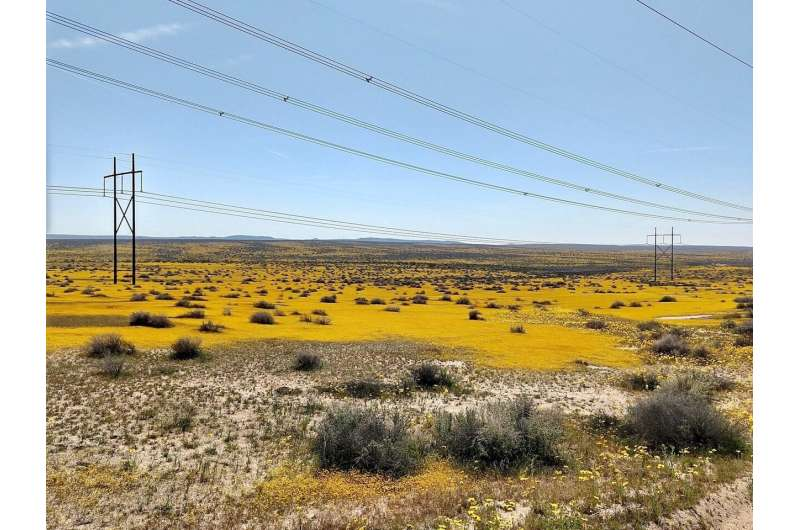 Solar development: super bloom or super bust for desert species?