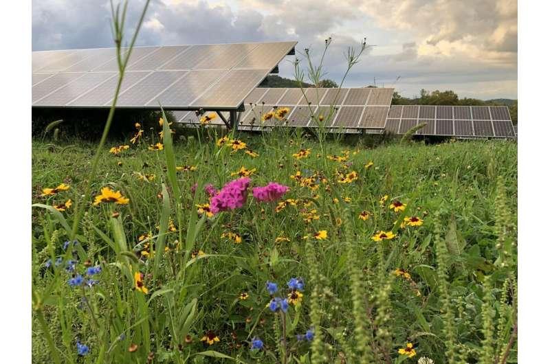 Energía solar y conservación de polinizadores: ¿un camino para un impacto real?