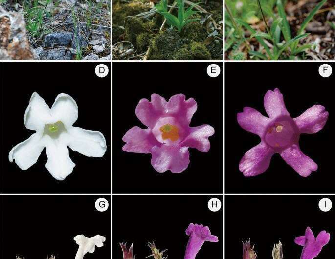 Some Alpine plants have north–south genetic structure along elevational gap between 30°N and 31°N