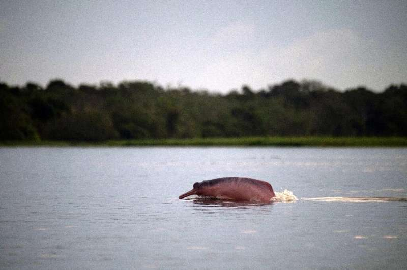 Some animals, like the Amazon pink river dolphin are tricky to track using conventional methods