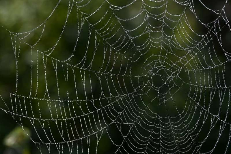 Some spiders release webs to create a makeshift parachute