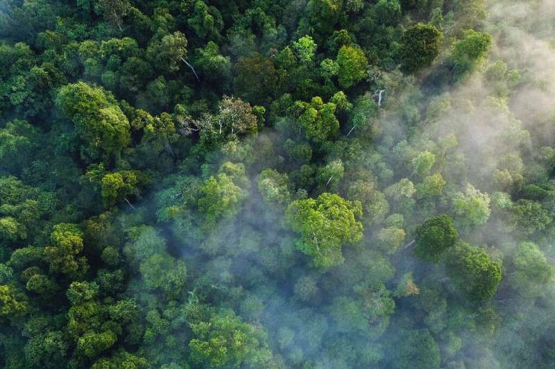 Some wealthy nations without natural resources such as forests to mitigate their contribution to climate change have spent huge