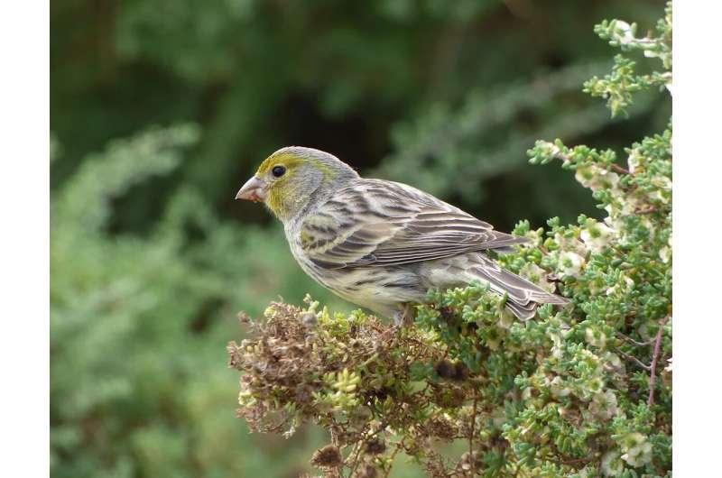 Songbird ancestors evolved a new way to taste sugar