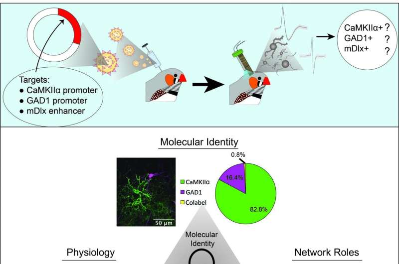 Songbird neurons for advanced cognition mirror the physiology of mammalian counterparts