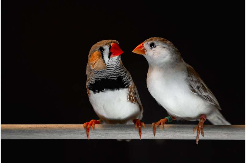 Songbirds and humans share some common speech patterns