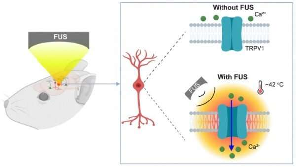 Sonothermogenetic pulse controls mouse behavior