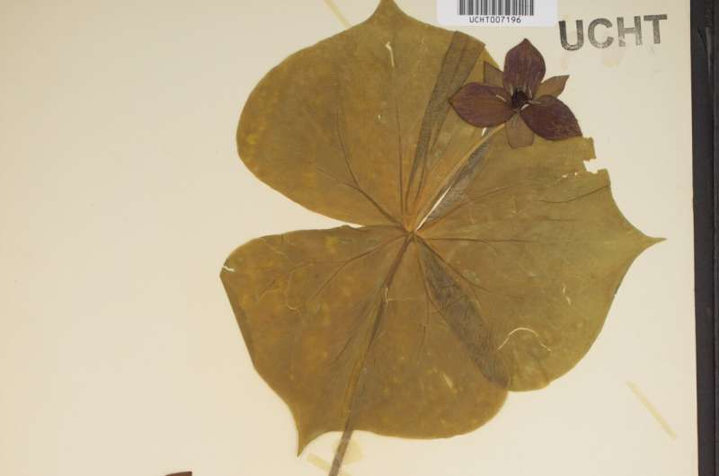 Southeastern US herbaria digitize three million specimens, now freely available online