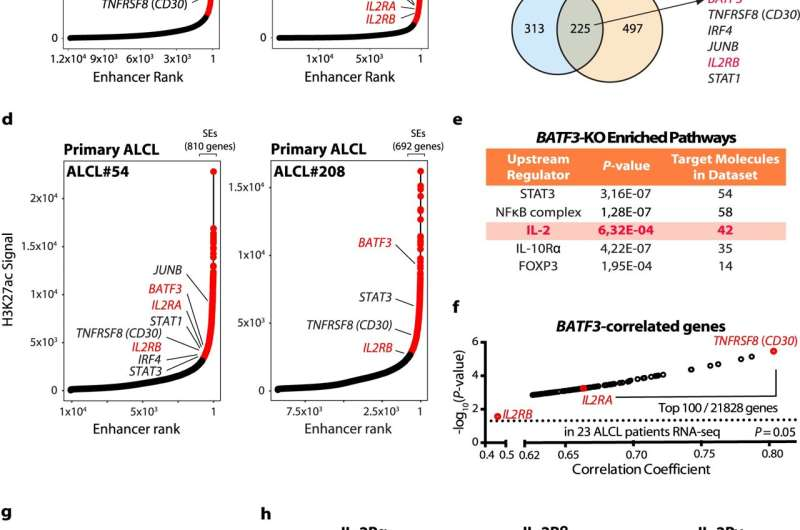 Special transcription factor and its target genes represent approach to therapy for rare leukaemia type