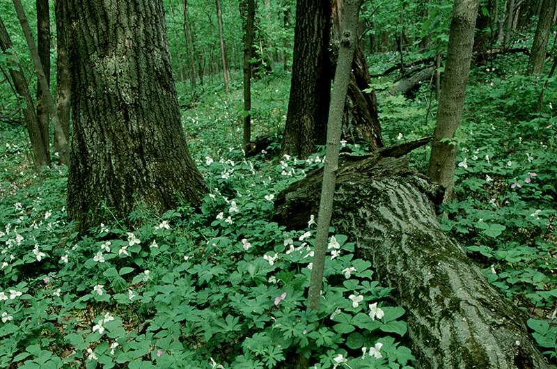 Spring forest flowers likely key to bumble bee survival, Illinois study finds