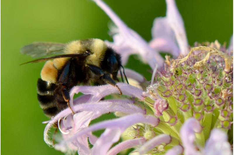 Spring forest flowers likely key to bumble bee survival, study finds