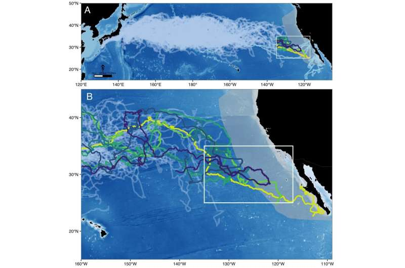 Stanford researchers and others illuminate mystery of sea turtles' epic migrations