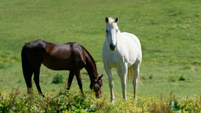 'Stealthy' stem cells better for treating tendon injuries in horses