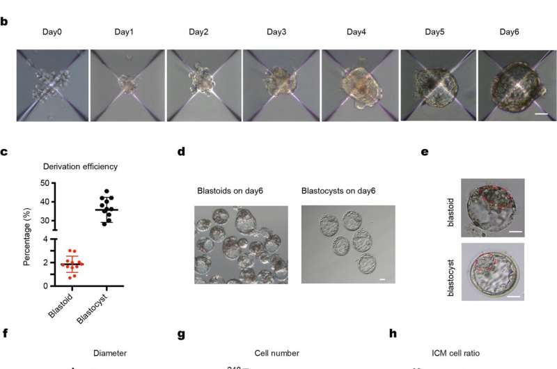 Stem cell model for early human embryo development
