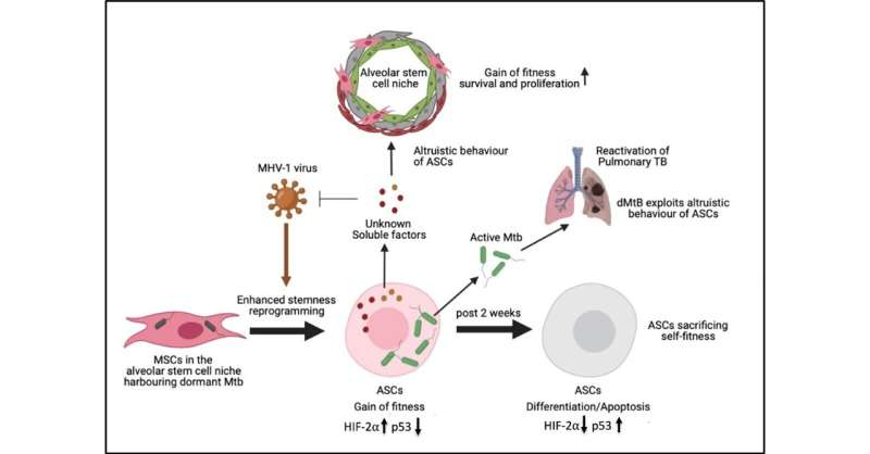 Stem cells may hold a key to developing new vaccines against COVID-19