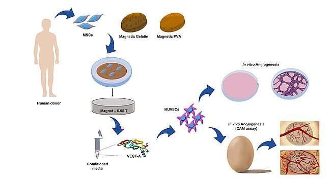 Stimulating blood vessel formation with magnetic fields