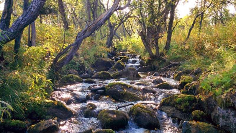 Streams and rivers emit more carbon dioxide at night than day