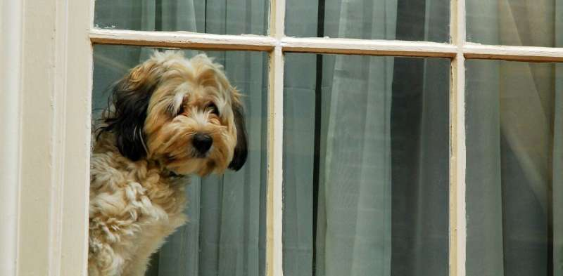 Stressed pets: how to keep your dogs relaxed when leaving them alone