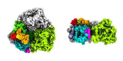 Structural study of photosystem I containing chlorophyll d provides hints of how it harnesses low-energy light