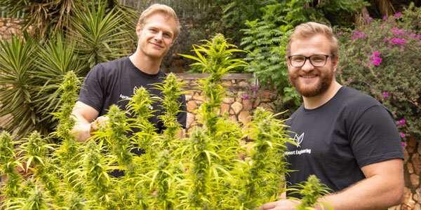 Los estudiantes desarrollan una tecnología única de cultivo de cannabis.
