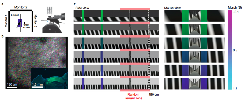 Study examines experience-dependent contextual codes in the hippocampus