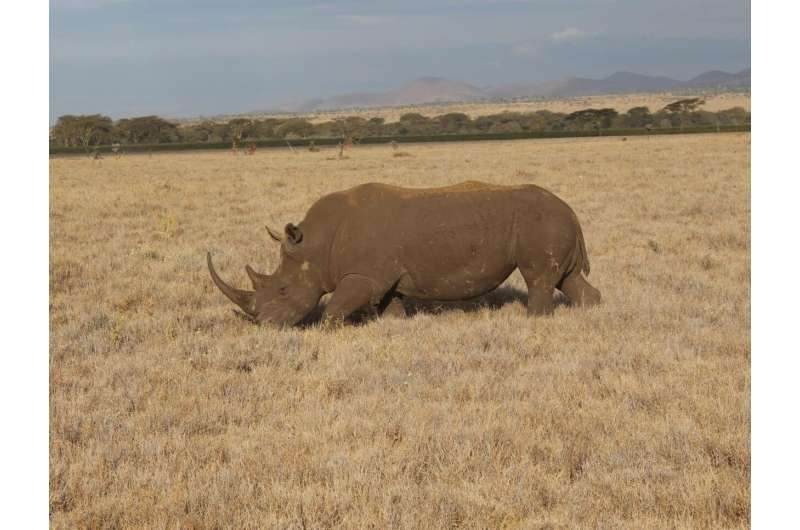 Study examining biodiversity loss calls for urgent global economy 'rethink'