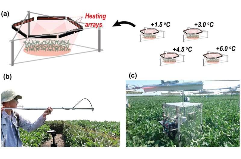 Study: Fluorescent light clarifies relationship between heat stress and crop yield