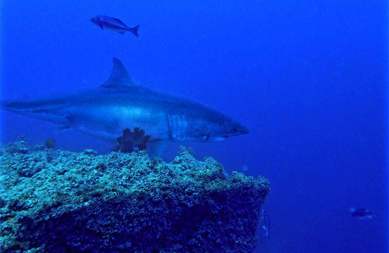 Study of nature preserve turns up more than 1,000 species and signs of changing oceans