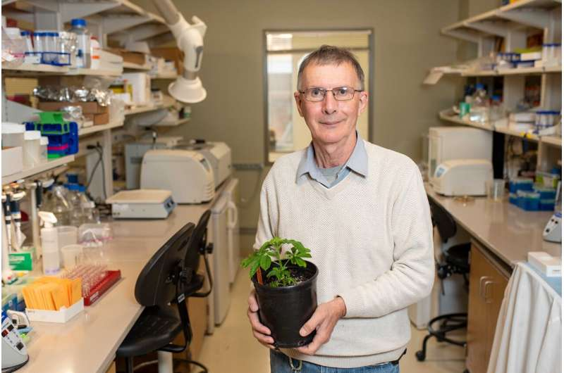 Study of plant molecules could make food more nutritious for animals, better for planet