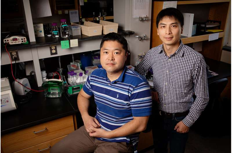 Study offers insight into underlying causes of seizure disorder in babies